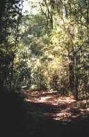 sunlit path in Knysna Forest
