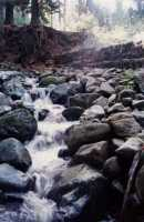 Newlands Stream after first rains (Autumn 1993)