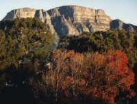 autumn trees in front of Table Mountain